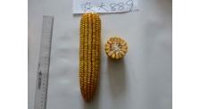 中晚熟区吉林玉米品种玉米新品种销售