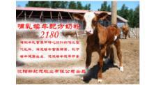 犊牛代乳粉销售