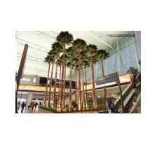 上海保鲜棕榈树供应商