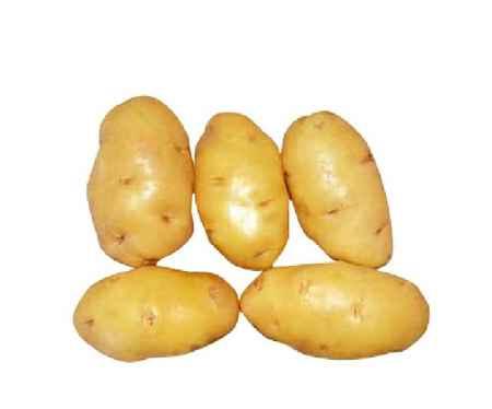 牙克石闽薯1号