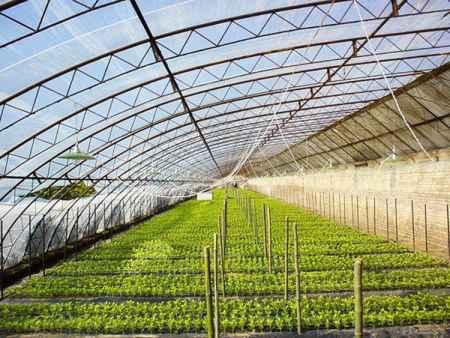育秧专用农膜供货商